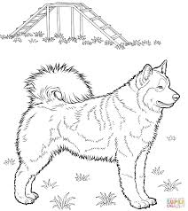 Brilliance Husky Coloring Page Free Printable