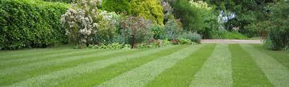 Image For Lawns Moss In Your Lawn How To Prevent Cure