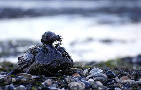 Resultado de imagen de imagenes marea negra golfo de mexico