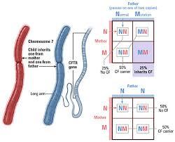 Cystic Fibrosis Inheritance Pattern Gorgeous Diagnosis Testing Prenatal Screening Johns Hopkins