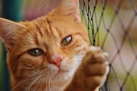 Katzenschutznetz Aus Liebe Zu Ihrem Stubentiger