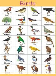 Hindi Birds Name Chart Birds Name Chart Birds Pictures With Names Birds Name