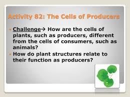 Producers And Consumers Venn Diagram Ppt Activity 82 The Cells Of Producers Powerpoint