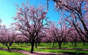 hd wallpapers nature spring. Wonderful Spring Spring Wallpaper Nature Wallpapers Intended Hd U