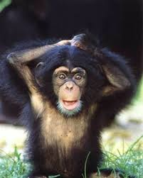 Image result for funny monkey pictures