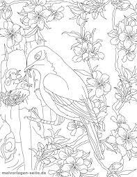 Kleurplaat Vogel Feeds Jongen Voor Volwassenen Gratis