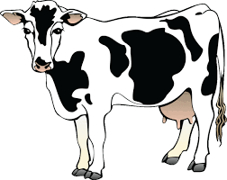 cow clipart black and white.  Black Cows Clipart Black And White And Cow Clipart Black White