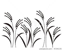 rice plant drawing. Wonderful Plant Image Result For Line Drawing Rice Plants And Rice Plant Drawing E