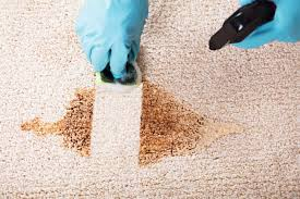 how to clean vomit from carpet 7 tips