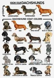 Coat Color Doggies Com Dog Blog