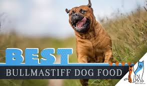 Bullmastiff Growth Chart 13 Best Bullmastiff Dog Foods With Top Puppy Senior Brands