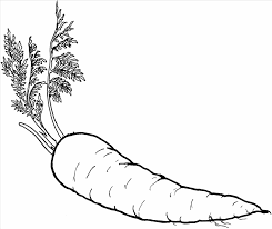 Small Picture Carrot Carrot Coloring Page With Leaves Vegetables Coloring Pages