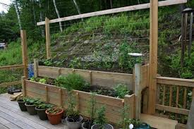 Small Picture Vegetable Garden Ideas Minnesota Best Garden Reference
