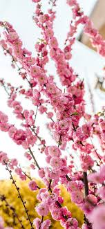 Spring iPhone 11 HD Wallpapers ...