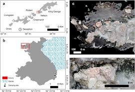 <b>Unmanned aerial vehicle</b> (<b>UAV</b>) survey of the Antarctic shag ...