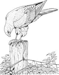 coloring pages to print birds images on zen and the colored pencil free coloring pages