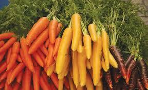 Goji - plantare, intretinere, cultivare