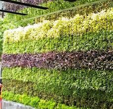 Small Picture Green WallsVertical Garden CompanyLiving WallDelhi NCR