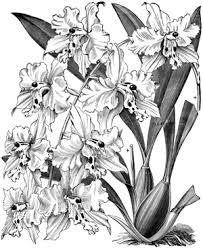 便箋 テンプレート おしゃれ 無料 シンプル A4 B5 かわいい胡蝶蘭 花
