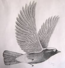 flying bird drawing.  Bird Cute Flying Bird Drawing Throughout