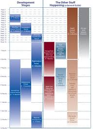 Puppy Development From Birth To Age 3 Puppy Growth Chart