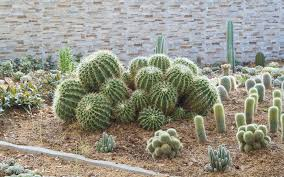 Small Picture 15 Cactus Garden Ideas Photos Garden Lovers Club