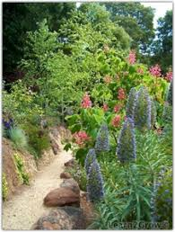 california native plants for the garden. Native Plants Will Give Your Garden Gorgeous Color That\u0027ll Survive California\u0027s Dry Summers! (Please Ignore The Non-native Pride Of Madeira In California For G