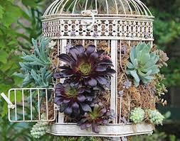 birdcage planter ideas you will love