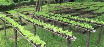 Organic Kitchen Gardening The Organic Farm Matava