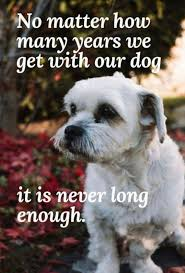 Pin By Debbie On All Dogs Go To Heaven Dog Quotes Love Dog Quotes
