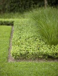 diy metal lawn edging. hardscaping 101: metal landscape edging diy lawn
