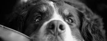 無料壁紙モノクロで撮影された犬の可愛いくてオシャレな写真画像