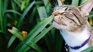 toxic plants for pets rspca nsw