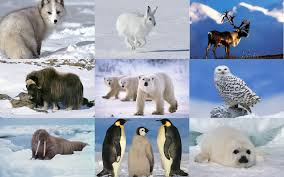Image result for polar animals