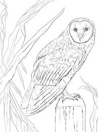 Barn Owl Colouring Pages Barn Owl Coloring Pages Printable Barn