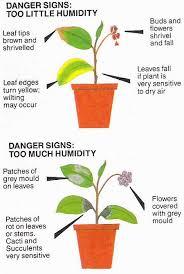 humidity-plants0001