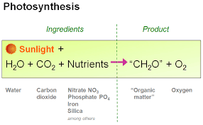 photosynthesis is a chemical process through which plants some protists and bacteria produce glucose