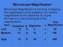 Microscope Magnification Chart 28 Veracious Microscope Magnification Chart