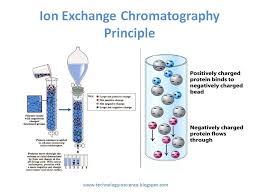 Ion Exchange Chromatography Theory And Principle