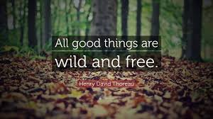 "Thoreau Quotes Classy Henry David Thoreau Quote ""All Good Things Are Wild And Free"" 48"