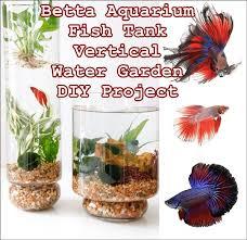 betta aquarium fish tank vertical water garden diy project the homestead survival siamese fighting