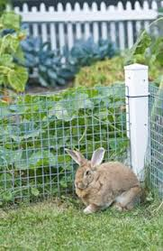 how do i keep rabbits out of my garden. Plain Rabbits How To Keep Rabbits Out Of Garden I HAVE Remember This Have A Huge  Rabbit Problem In My Yard In Do Of My Garden E
