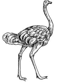 Small Picture 15 best Ostrich Coloring Pages images on Pinterest Coloring