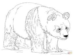 Small Picture Giant panda bear coloring page Free Printable Coloring Pages