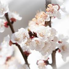 Aesthetic Flowers White iPad Wallpaper ...