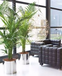 palm tree in living room maribo intelligentsolutions co