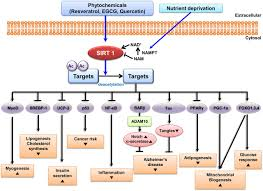 adaptive cellular stress pathways as therapeutic targets of figure