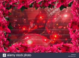 Rot Weihnachtsstern Weihnachten Blume Rahmen Hintergrund Und