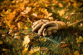 Fall Gardening Tips Bring The Birds To Your YardFall Gardening