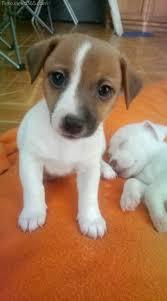 Sie sind jedoch eher süße und sanfte wesen, solange sie ihnen viel liebe, aufmerksamkeit und fürsorge. Kleine Hunderassen Die Mehr Qua Zuckerig Sind Tiere Deko365